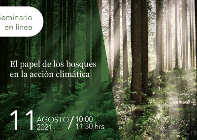 El papel de los bosques en la acción climática